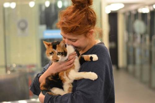 forever-following-heartlines:  Battersea Dogs & Cats Home: Florence and the Machine's world famous front woman Florence Welch has rehomed a Battersea cat. Marvellous moggy Missus won over the fiery red-headed star wit