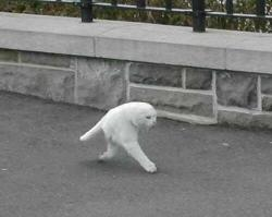 bleproxursox:  unicornology:  b0yfights:  google street view made half a cat i cant breathe it's the fucking middle stage of an animorph  oh god