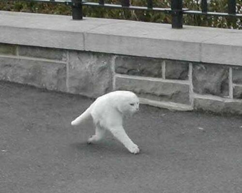 unicornology:  b0yfights:  google street view made half a cat i cant breathe it's the fucking middle stage of an animorph  oh god