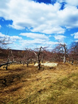 orchards Highland, New York, USA photography and adventuring- Rachel Anne Gottlieb