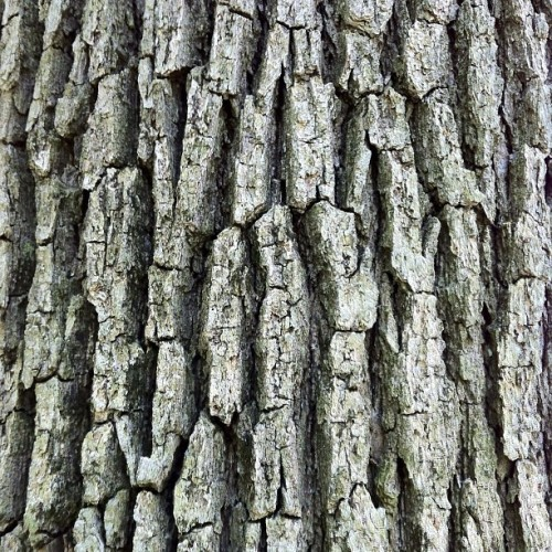 #tree #trunk #bark #iPhone #hdr #nofilter #wallpaper #background #macro #art #landscape #photography #natural #outdoor #scenery