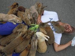 funny animals cute hilarious animal bunny rabbit pet rabbits pale feed