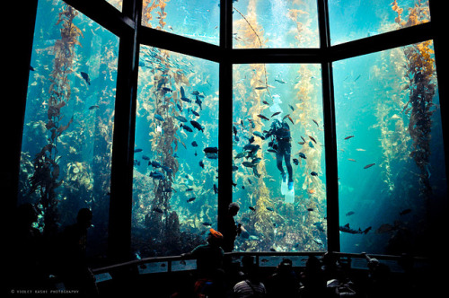 Kelp forest by Violet Kashi on Flickr.