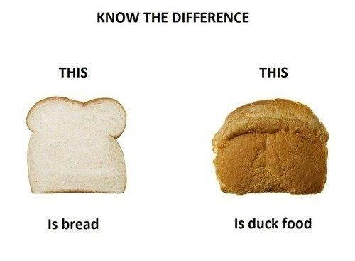 bread kills ducks idiots do your research! dont kill with kindness