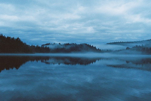 Foggy January by aliwithers on Flickr.