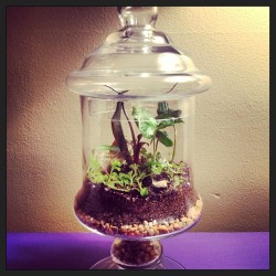 jasmineinherhair:  Made lots of terrariums for the foundry tomorrow. Check out www.facebook.com/sylvaticashop #terrariums #terrarium #glassware #plants #plant #houseplants #flower #flowers #flowerporn #moss #grow #growing #growth #vintage #garden #gardening #terrariumlove #sylvatica #sylvaticashop #thefoundry #makebuffalo #makebuffalony #layers #shadow #light #beauty #colorful #art #plantart #livingart  (at Great Outdoors)