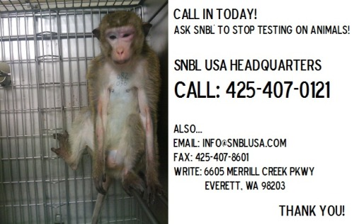 Today Action for Animals is having a protest at the headquarters of SNBL USA, a contract animal research facility. Each year, SNBL tests on thousands of animals—dogs, rabbits, mice, primates, and others—who are subjected to violent and careless treatment, including hundreds of violations of the federal Animal Welfare Act and an incident in which a monkey was boiled alive. Please help us make this protest more powerful and join us in speaking out for all the animals who are tortured and killed by SNBL by calling them NOW and demanding that they stop testing on animals!