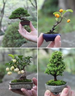 orchid-ink:  a-mini-a-day:  Hyperventilating  tiny bonsai aw