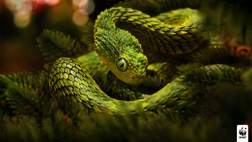 mererecorder:  Christmas snake by ~glazyrin