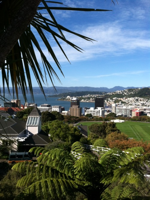 Wellington My folks are traveling. Mom sent me this picture. I'm just wondering why it has to look so perfect there. Come to think of it, other than Christchurch after the earthquake a few years ago, I don't think I've ever seen a picture wherein New Zealand didn't look idyllic. Sigh.