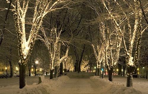 christmas snow winter holiday xmas christmas tree tree christmas eve christmas lights fairy lights park snowflakes