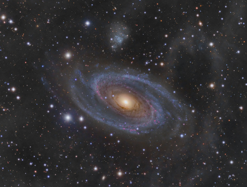 Grand Spiral Galaxy M81 and Arp's Loop      One of the brightest galaxies in planet Earth's sky is similar in size to our Milky Way Galaxy: big, beautiful M81. This grand spiral galaxy lies 11.8 million light-years away toward the northern constellation of the Great Bear (Ursa Major). The deep image of the region reveals details in the bright yellow core, but at the same time follows fainter features along the galaxy's gorgeous blue spiral arms and sweeping dust lanes. It also follows the expansive, arcing feature, known as Arp's loop, that seems to rise from the galaxy's disk at the upper right.