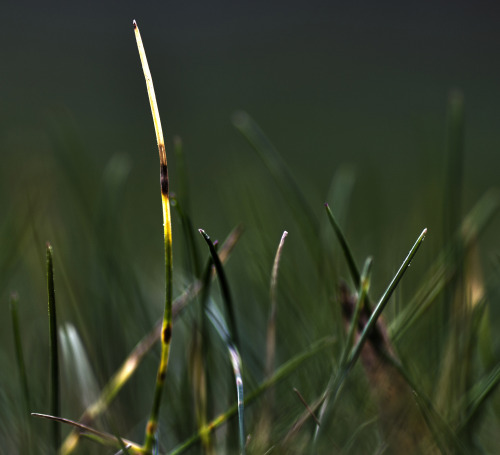 newkilleryoff:  Marvel at my HDR Grass!