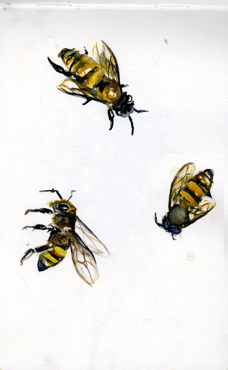 """Three Bees""  watercolor, micron, pencil  Rae <3"