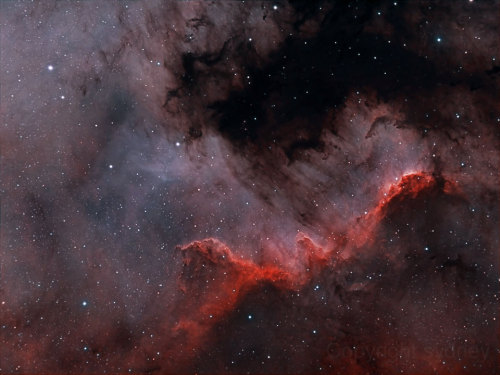 yesastronomyyes:  The North America nebula on the sky can do what the North America continent on Earth cannot — form stars. Specifically, in analogy to the Earth-confined continent, the bright part that appears as Central America and Mexico is actually a hot bed of gas, dust, and newly formed stars known as the Cygnus Wall. The above image shows the star forming wall lit and eroded by bright young stars, and partly hidden by the dark dust they have created. The part of the North America nebula (NGC 7000) shown spans about 15 light years and lies about 1,500 light years away toward the constellation of the Swan (Cygnus).