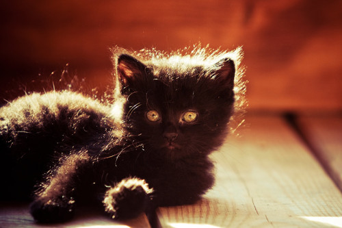 photogenicfelines:  (Mindas)