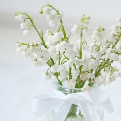 Oh, how much I love this flower… Lily of the valley #lilyofthevalley #lily #flower #white #spring #favorite #delicate #ribbon #