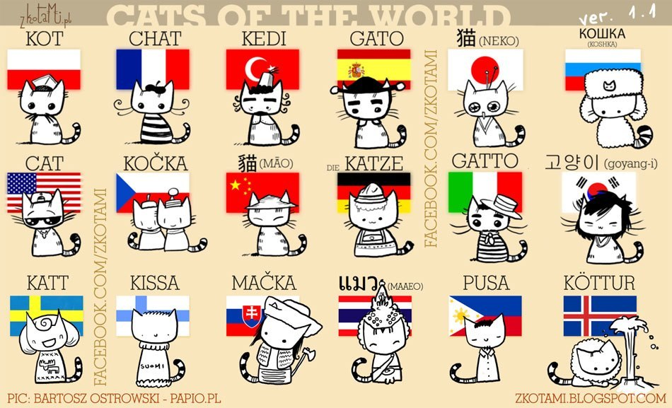 Cats of the world!!