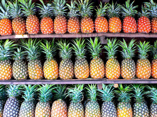 coller-dans-ce-ville:  02x19:  pinapples everywhere 💆💆  ❁