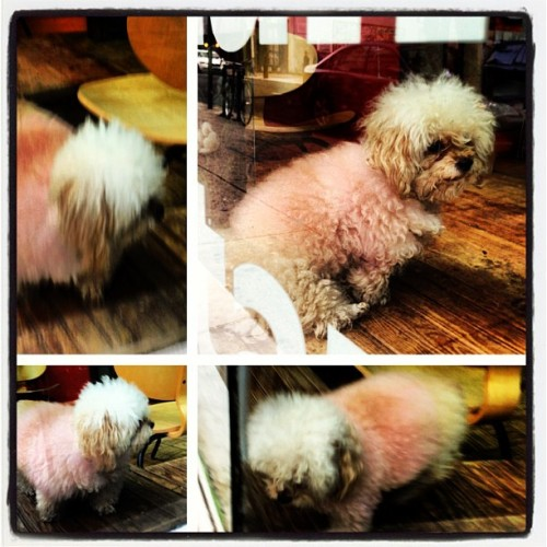 Bernard, the pink poodle.  One of the greatest treasures of Philadelphia.