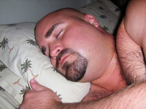 beargay:  Sleeping furry bear.