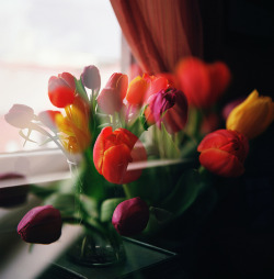 the ghostly tulips (double exposure) by manyfires on Flickr.