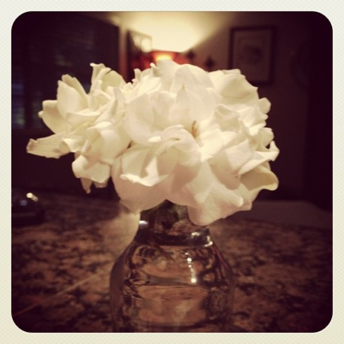 I love the gardenias from my garden!  (at Somewhere In Forest Pines)