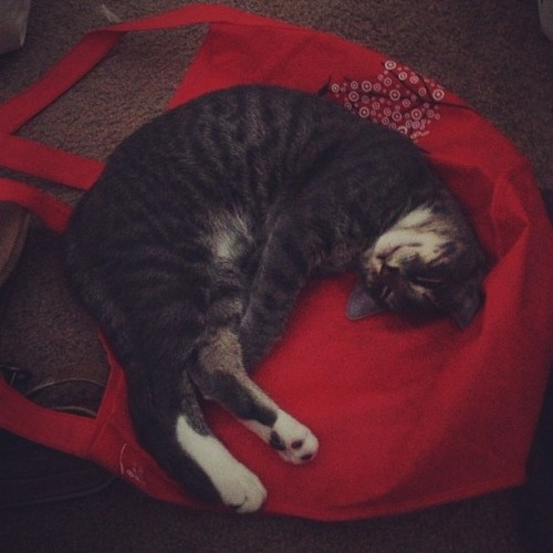 He was carrying this empty bag around in his mouth. 😻
