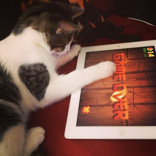 My cat is seriously playing #fruitninja right now!! 😂😸
