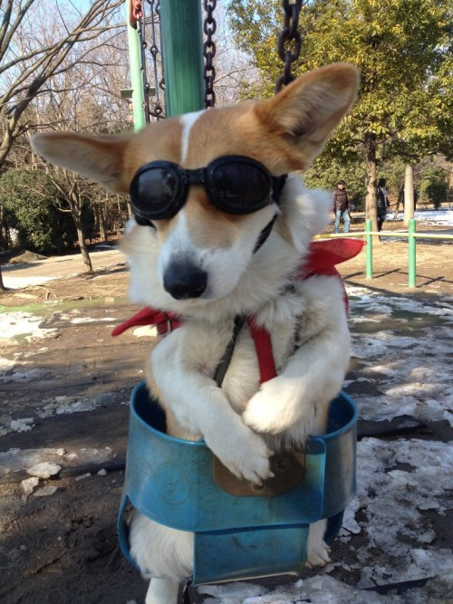 millionsofdicks:  cool  doggles