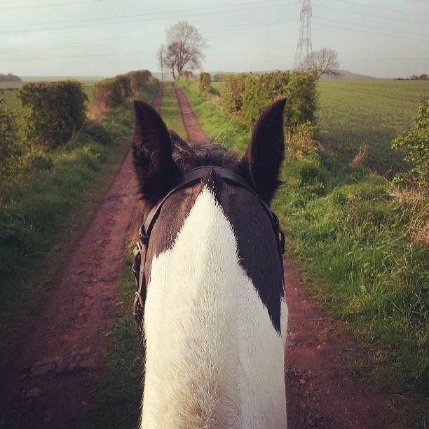 Was a lovely evening for a hack then some jumping