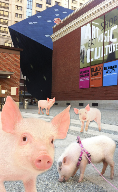 "Introducing the latest installation at the CJM—a pig petting zoo right in front of the museum. ""Please Touch the Treyf: Beyond Fear in Jewish-Bacon Relations"" encourages visitors to look at, touch, but not eat these adorably unkosher creatures as a way to combat negative perceptions of swinekind. Oh, and April Fools :)"
