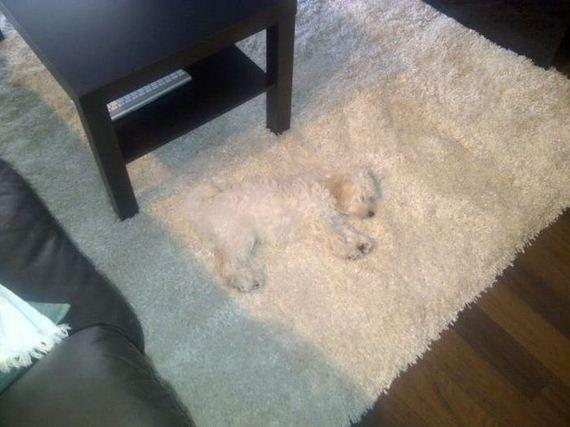 aintnowiifey:  buttsbutts:  unsafe  we had I get rid of our carpet , lol same thing with my little dog