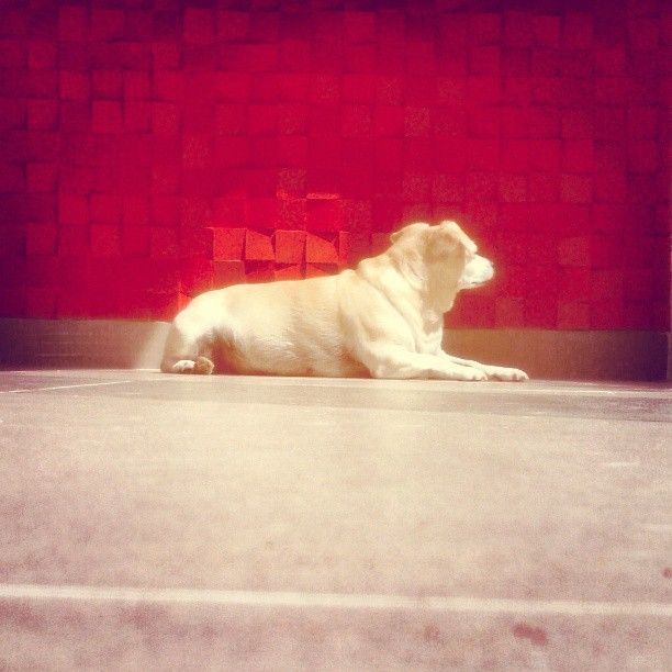 the lazy sunbather #dog #pet #puppy #mascot #floor #wall #wallporn #red #redlicious #tile #sun #sunbath