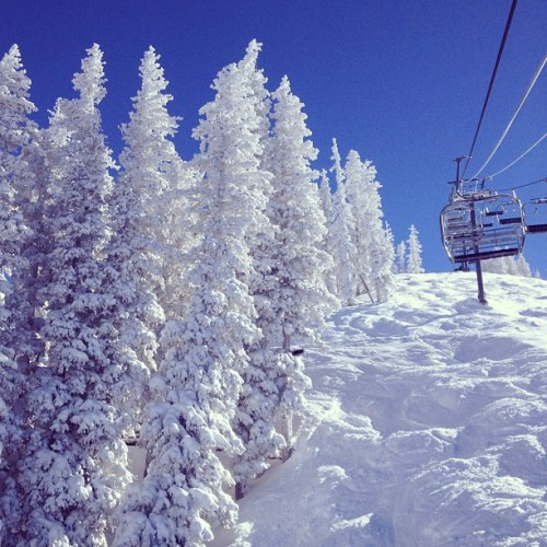 the most beautiful snow pines.  #chairlift #pow #telluride #colorado #snow #bluebird #winter #landscape #snowboard