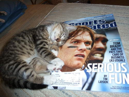 there will be no patriots fans in this house, cat.