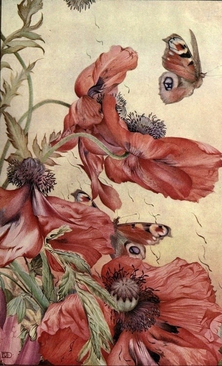 darksilenceinsuburbia:  Edward Julius Detmold .     In Wikipedia