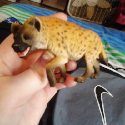 sleepingwiththedrummer:  So i finally found a hyena c': #happy #hyena #thankgod