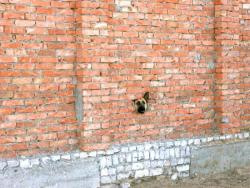 veintegenario:  I´m not just another brick in the wall