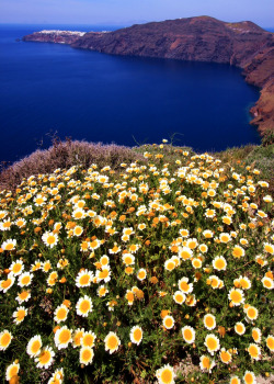 methexys:  Seascape with daisies (by Marite2007)
