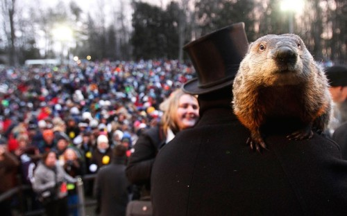 tumblr mhqywiOaoZ1qzou5ko1 500 Groundhog co handler Ron Ploucha holds Punxsutawney Phil in...