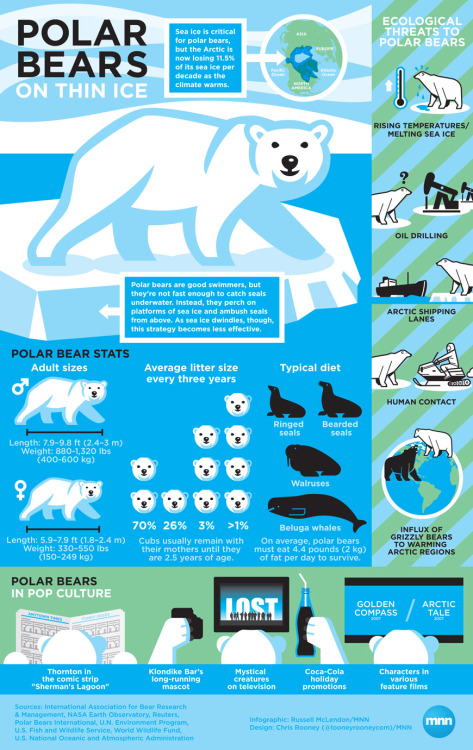 It's International Polar Bear Day!  Infographic: Polar bears in peril     Polar bears have ruled the Arctic for 100,000 years, but now they're struggling to keep up as the region undergoes a dramatic transformation.