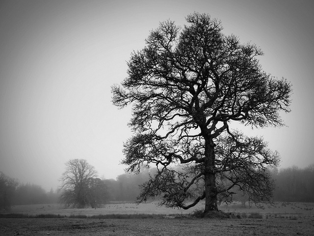 oak on Flickr.