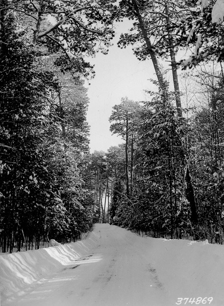 Brrr  Photograph of Winter Scene Along Pike Bay Loop Road, 01/1939  It is a chilly day in Washington, DC, is it cold in your neck of the woods?
