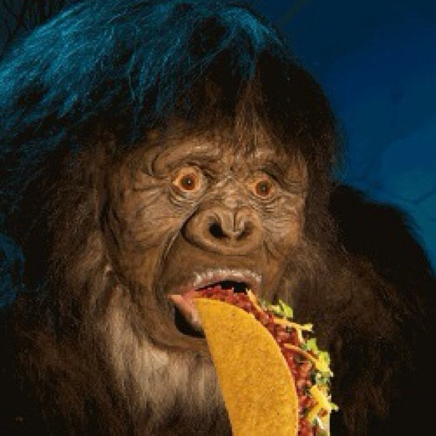 #bigfoot #taco #tacobell #goodeats #bbw #Sasquatch