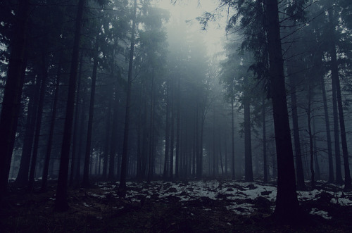 planet-earthh:   Foggy Forest 5 by Meyer Felix on Flickr.