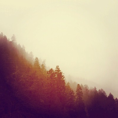 lylaandblu:  Into the woods once again… The fog… #fog #forest #nature #landscapes #burnt #trees #travel #adventure
