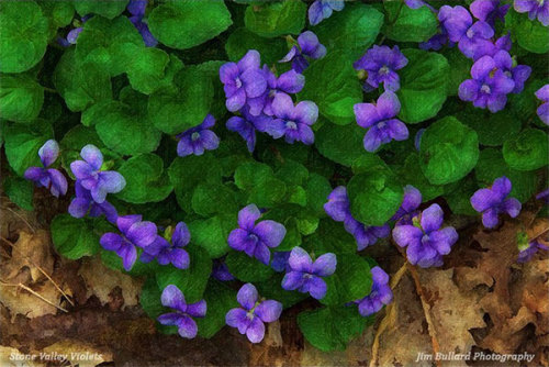 "Artwork of the Day: ""Stone Valley Violets,"" digital image. Artist: Jim Bullard"