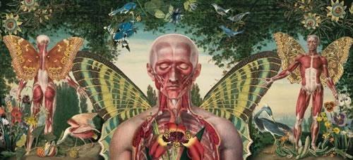 Art anatomy Macabre Surrealism Juan Gatti