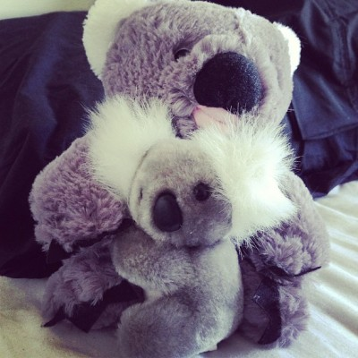 I so love koalas! 🐨🐨🐨 #koalas #cuties #awh
